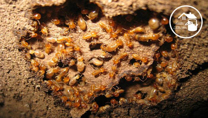 شركة مكافحة حشرات ببيشة, شركة مكافحة النمل الابيض ببيشة, شركة رش مبيدات ببيشة