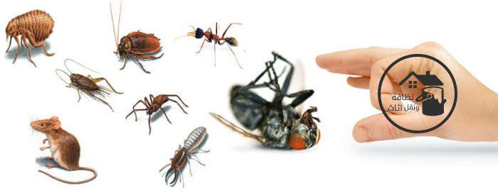 شركة مكافحة حشرات بينبع, شركة رش مبيدات بينبع