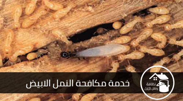 شركة مكافحة النمل الابيض بالمدينة المنورة, مكافحة النمل الابيض بالمدينة المنورة