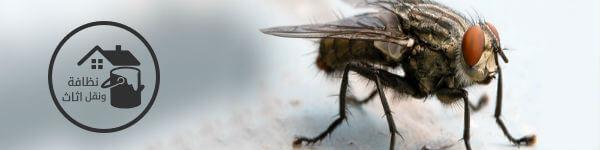 شركة مكافحة حشرات بالرياض, مكافحة حشرات بالرياض, شركه مكافحه حشرات بالرياض